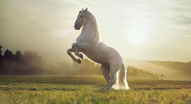 Спорт Запитання-цікавинка: Яким загальним поняттям об'єднані всі види ходи коня?