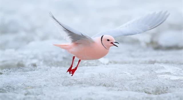 природа Запитання-цікавинка: Яку назву носить чайка, зображена на фото?