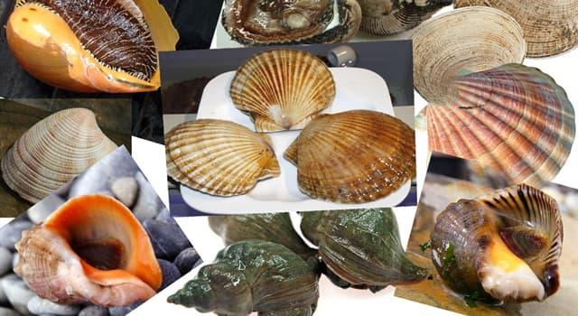 natura Pytanie-Ciekawostka: Które z tych ślimaków morskich są jadowite?