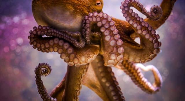 Natur Wissensfrage: Welche dieser Kraken sind giftig?