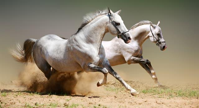Geschichte Wissensfrage: Wem gehört der Spruch «Mitten im Fluss soll man nicht die Pferde wechseln»?