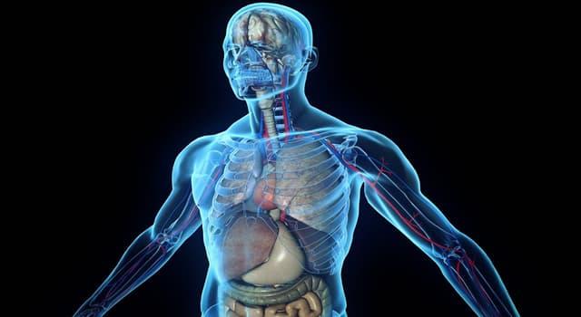 Wissenschaft Wissensfrage: Was ist die größte Drüse im menschlichen Körper?
