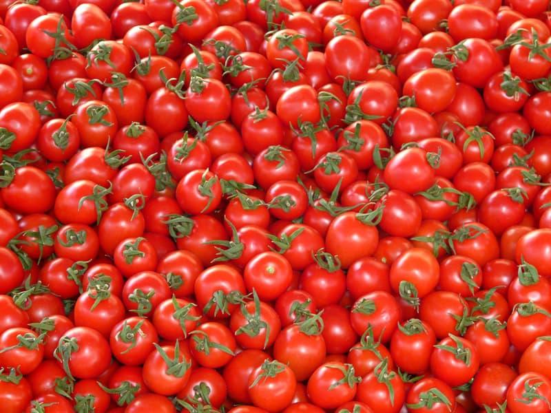 natura Pytanie-Ciekawostka: Czy pomidory były kiedykolwiek uważane za trujące?
