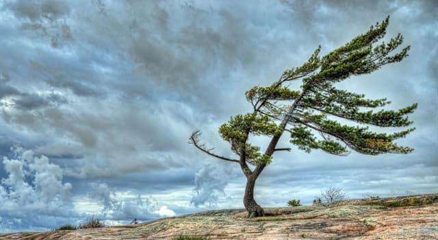 природа Запитання-цікавинка: Що є причиною вітру?