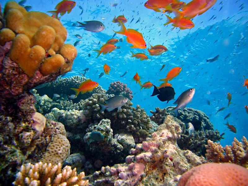 Natur Wissensfrage: Wie heißt die größte zusammenhängende Ansammlung von Korallenriffen der Erde?