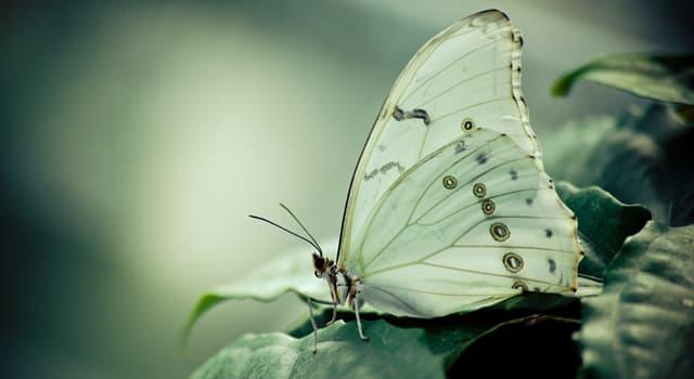 природа Запитання-цікавинка: Чим харчуються метелики?