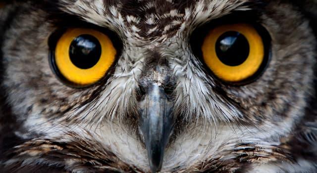 природа Запитання-цікавинка: Чим сови допомагають сільському господарству?