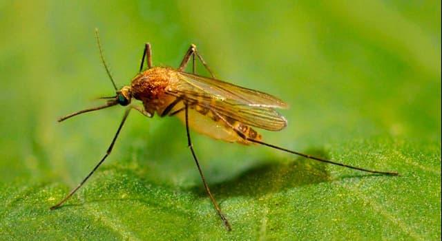 природа Запитання-цікавинка: Чим шкодять комарі людині?