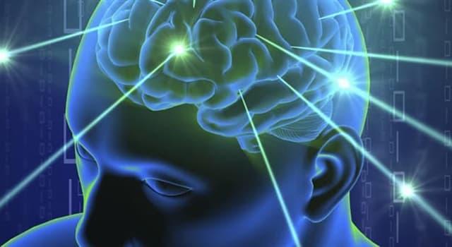 Wissenschaft Wissensfrage: Die Gehirnzellen bestehen zu 60% aus...
