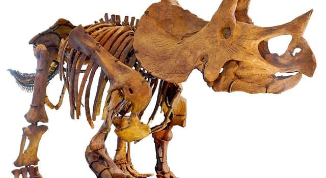 """natura Pytanie-Ciekawostka: Dlaczego ten dinozaur nazywał się """"Triceratops""""?"""