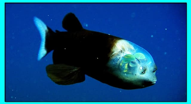 Natur Wissensfrage: Existiert in der Natur der Fisch, der auf dem Foto dargestellt ist?