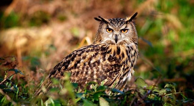 природа Запитання-цікавинка: Де живуть сови?