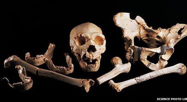 nauka Pytanie-Ciekawostka: Gdzie jest najmniejsza kość w ludzkim ciele?