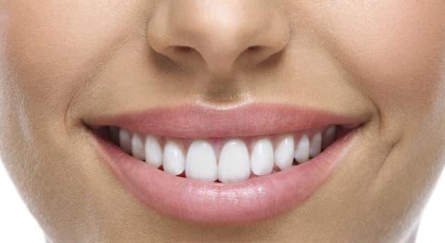 nauka Pytanie-Ciekawostka: Ile stałych zębów ma przeciętny dorosły człowiek?