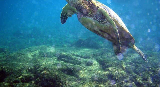 nauka Pytanie-Ciekawostka: Jaka nauka zajmuje się konkretnie życiem roślin i zwierząt w morzu?