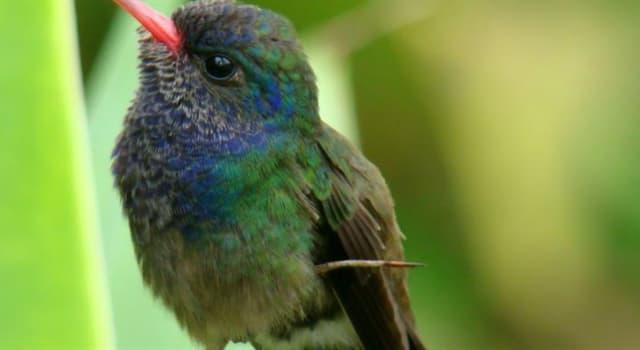 natura Pytanie-Ciekawostka: Jaki ptak jest najmniejszy ?