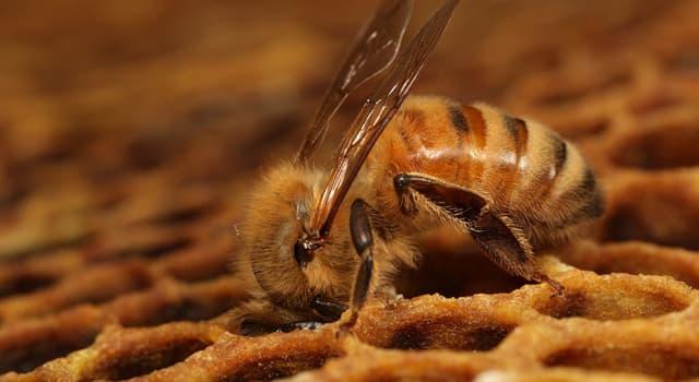 Natur Wissensfrage: Wie kann man einen Wespenstich vermeiden?