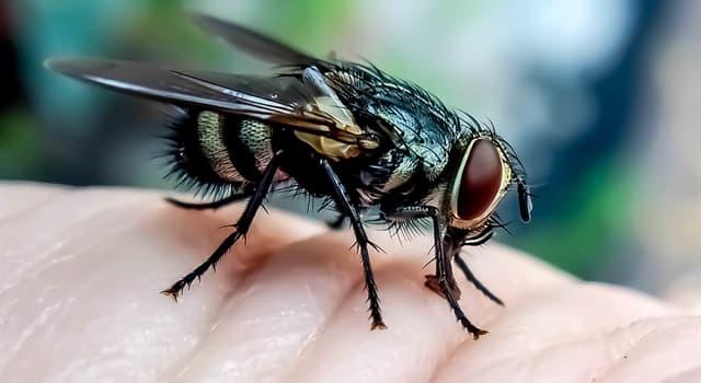 природа Запитання-цікавинка: Як називається сукупність кровосисних двокрилих комах?