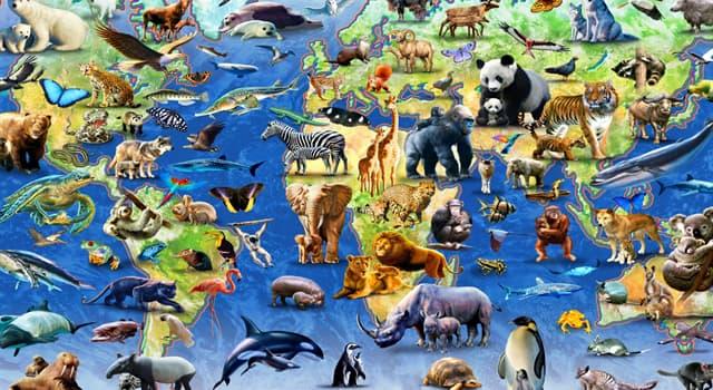 природа Запитання-цікавинка: Як називають здатність тварин після міграцій повертатися на свою ділянку проживання?