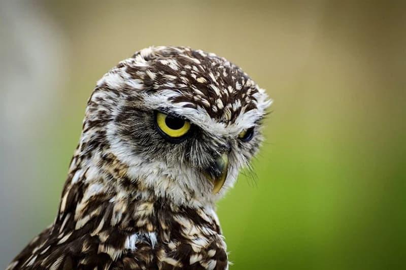 Natur Wissensfrage: Was für ein Vogel ist auf dem Bild?
