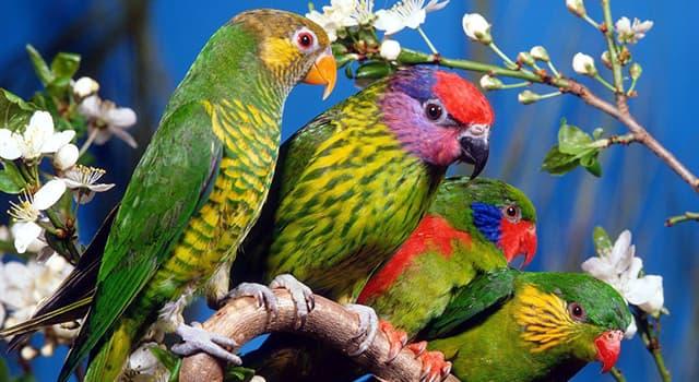 природа Запитання-цікавинка: Який факт про папуг невірний?