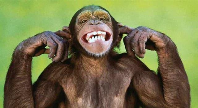 Natur Wissensfrage: Können Tiere psychische Erkrankungen haben?