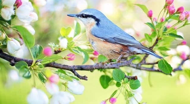 natura Pytanie-Ciekawostka: Które ptaki jako jedyne potrafią latać do tyłu?