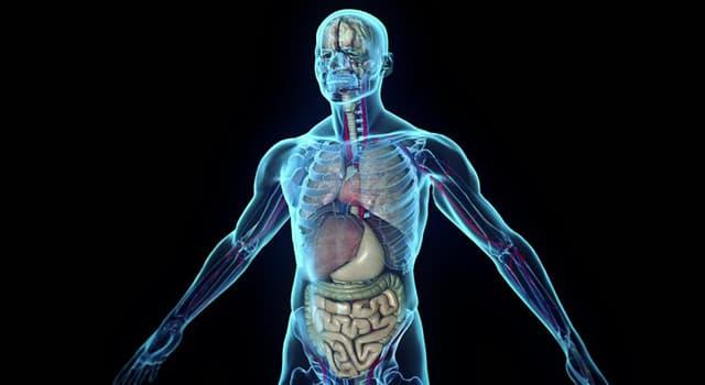 nauka Pytanie-Ciekawostka: Który z narządów znajduje się w jamie czaszki?