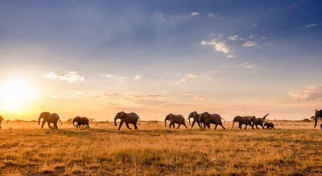 Geografia Pytanie-Ciekawostka: Na którym kontynencie leży Botswana?
