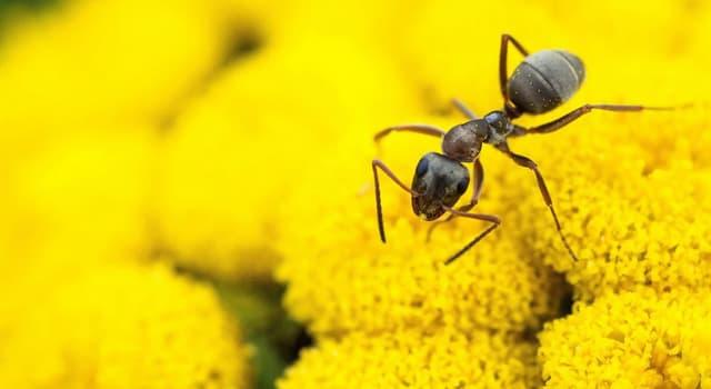 природа Запитання-цікавинка: За допомогою чого спілкуються мурахи?