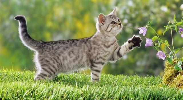 Natur Wissensfrage: Stimmt es, dass Schokolade für Katzen giftig ist?