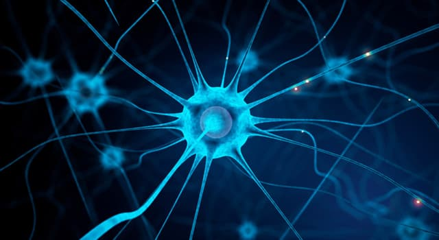 nauka Pytanie-Ciekawostka: W której części ciała ludzkiego można znaleźć nerw wzrokowy