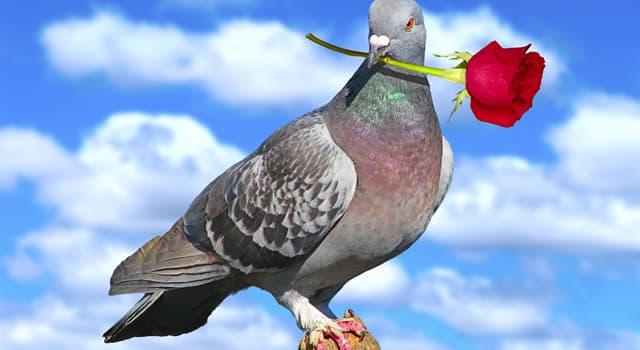 Natur Wissensfrage: Warum nicken Tauben beim Gehen ständig mit dem Kopf?