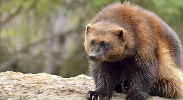 Natur Wissensfrage: Was für ein Tier ist auf dem Foto?