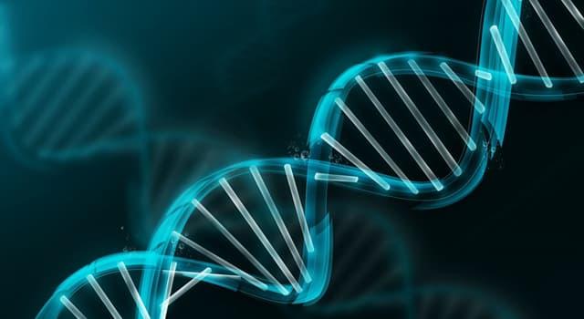 Wissenschaft Wissensfrage: Was ist die größte Zelle im menschlichen Körper?
