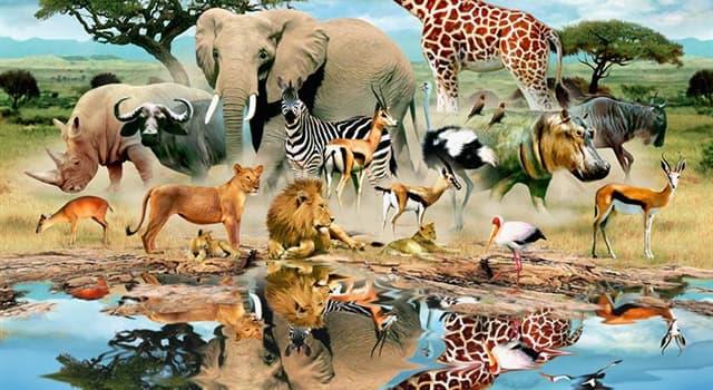 Natur Wissensfrage: Welches Tier hat die dickste Haut aller Lebewesen?