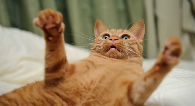 Natur Wissensfrage: Wer von Raubkatzen verfügt über das stärkste Gebiss?