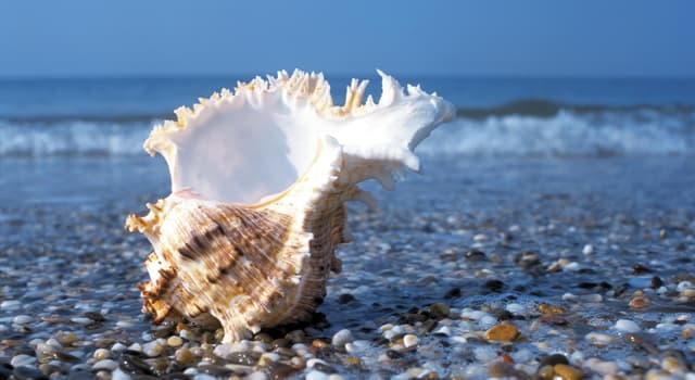 Wissenschaft Wissensfrage: Wie nennt man die Gesamtheit aller in der Bodenzone eines Gewässers vorkommenden Lebewesen?