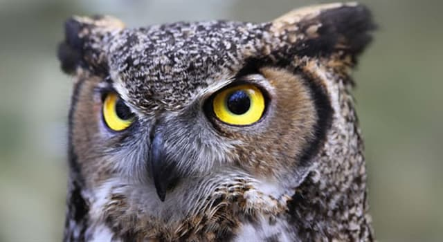 Natur Wissensfrage: Wie viele Augenlider hat eine Eule?