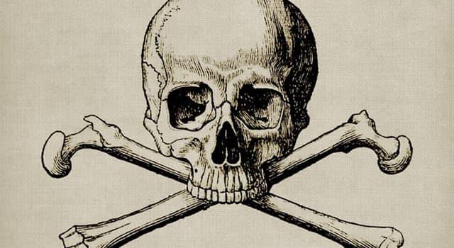 Wissenschaft Wissensfrage: Wo befindet sich der kleinste Knochen des menschlichen Körpers?