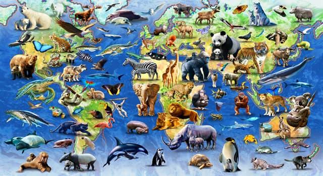 natura Pytanie-Ciekawostka: Z jakiej rodziny zwierząt jest impala?