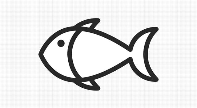 природа Запитання-цікавинка: Яку рибу називають сьомгою?