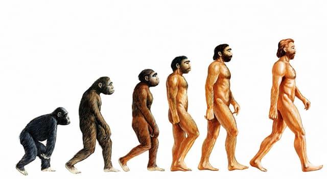 nauka Pytanie-Ciekawostka: Kto jest najbardziej znany z rozwijania teorii ewolucji?