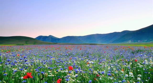 Kultur Wissensfrage: Welche Blume gilt als Symbol der Niederlande?