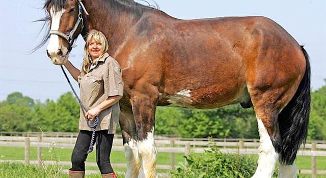 Natur Wissensfrage: Welches Gewicht hat das größte Pferd der Welt?