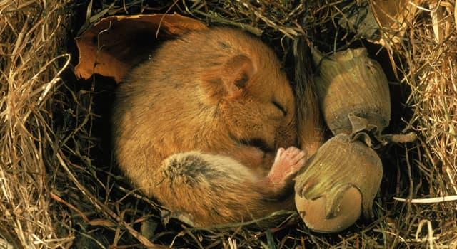 Wissenschaft Wissensfrage: Wie heißt der Sommerschlaf bei Tieren?