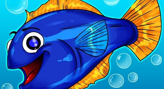 Natur Wissensfrage: Wie viele Augen haben Vieraugenfische?