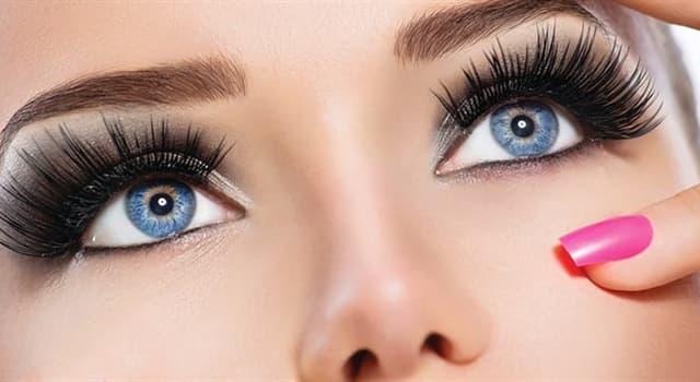 Natur Wissensfrage: Wozu dienen die Augenwimpern?