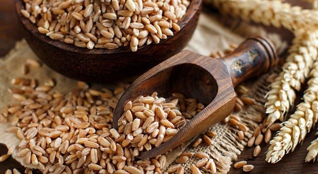 природа Запитання-цікавинка: Що з перерахованого є групою видів роду пшениця з плівчастим зерном і з ламкими колоссям?