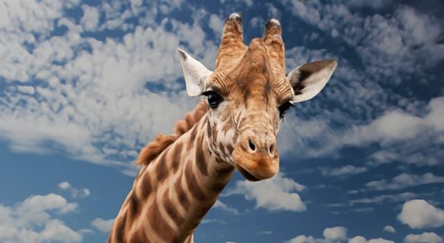 natura Pytanie-Ciekawostka: Jaki ssak jest najdłużej żyjącym na świecie?